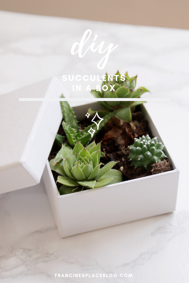 diy succulents box home decor gift idea francinesplaceblog