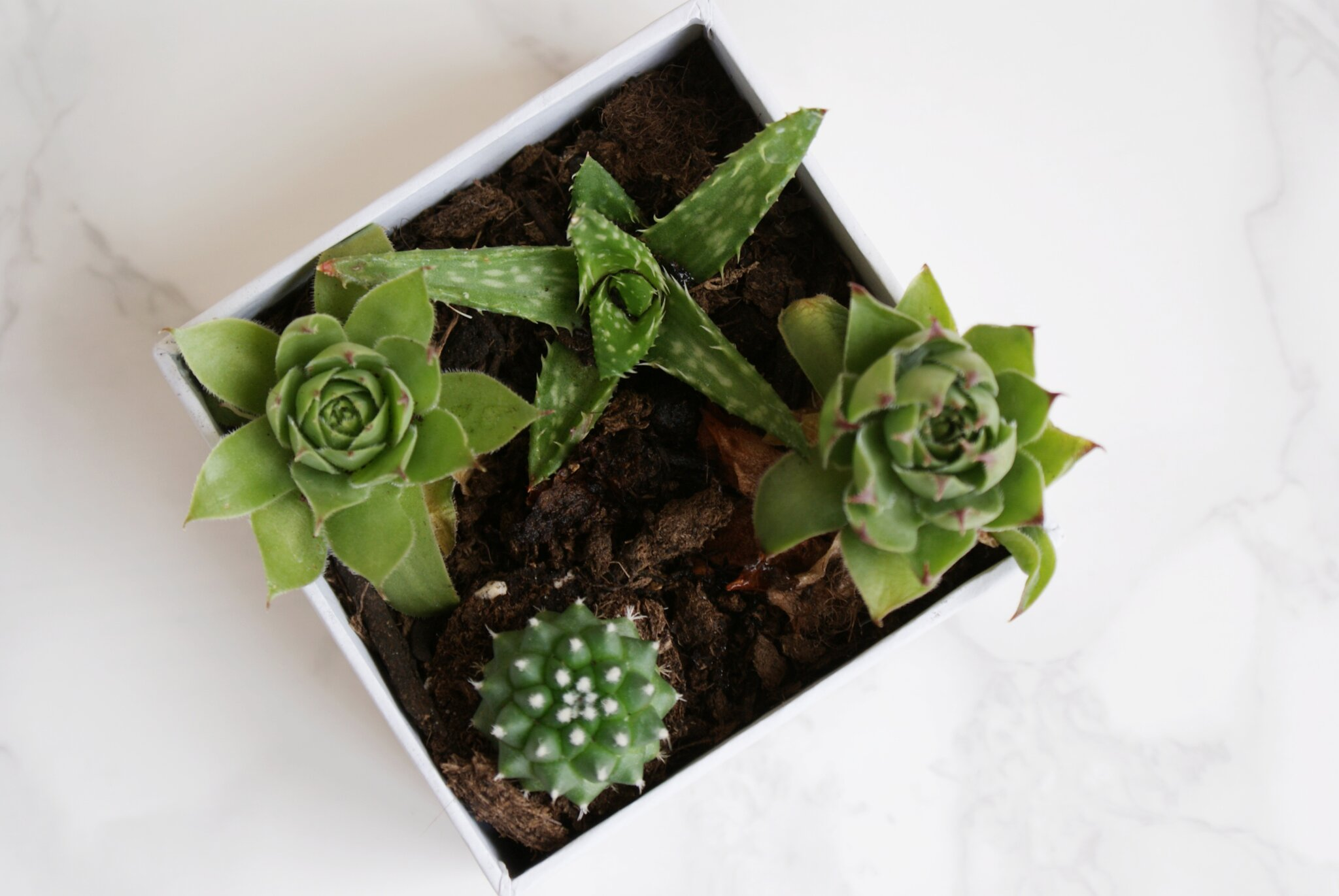 diy succulents box decor ideas